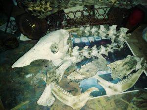 dem old bones